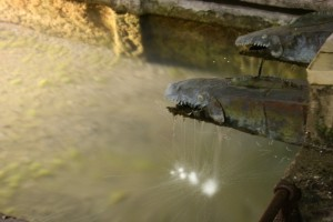 attenti ai piranha…fontana lavatoio di Lenzima fraz. Isera