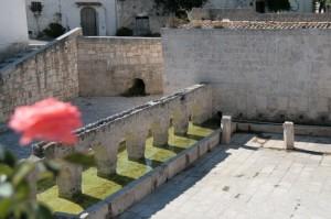 Fontana di Laterza con rosa in primo piano, sfocata