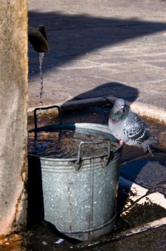 Venezia - Il colombo