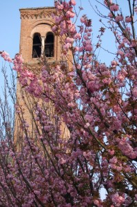 Fiori Rosa e Campanile di Mantova