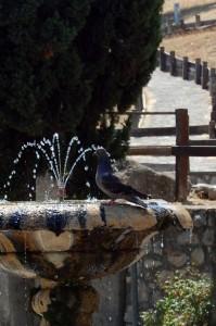 Fontana a Sermoneta