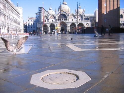 Venezia - gabbiano e San Marco