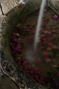 Gerace, fontana in pietra e petali di fiori