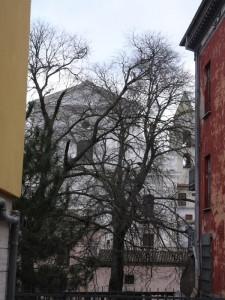 Chiesa Madre (attraverso gli alberi)