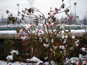 Fontana nella neve 2