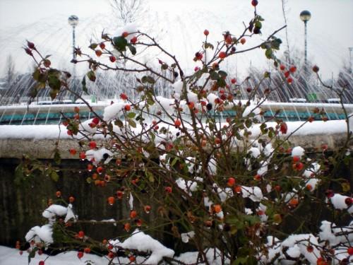 Milano - Fontana nella neve 2