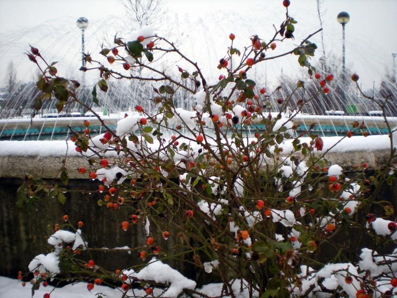 ''Fontana nella neve 2'' - Milano