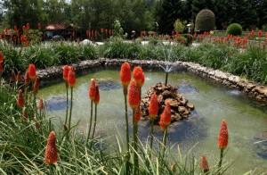 Giochi di acqua, luce e colore (Villa Vittoria - Mongiana)