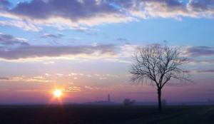 L'albero, il sole, la basilica