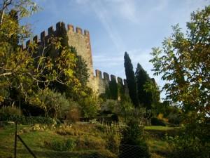 il castello tra le piante