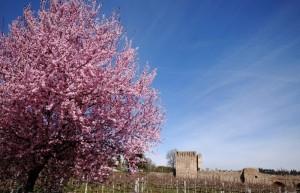 Primavera al Ponte Visconteo