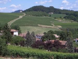 Inselmina e le vigne della Vecchia Cerreta….