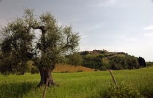 Montalcino - Castelnuovo dell'Abate