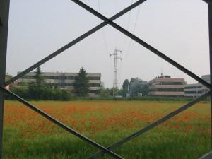 Hinterland e papaveri