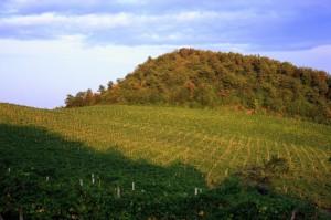 Vigne Euganee
