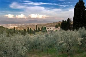 Bacchereto..vista sull' oliveto…