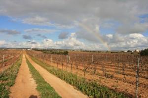 arcobaleno tra le vigne