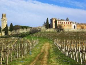 Tra vigne e castelli.