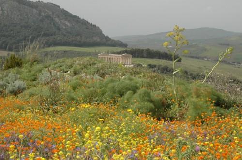 Calatafimi Segesta - Trionfo di primavera