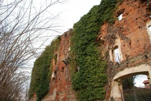 La natura ha preso il sopravvento sui ruderi del castello