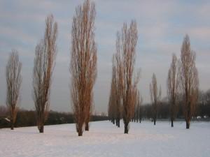 Mattinata d'inverno