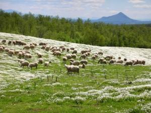 Mare d'erba