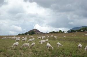 Pecore Nuragiche