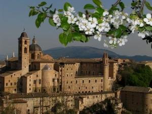 Urbino il palazzo ducale