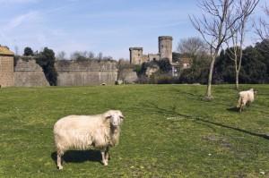 Castello con pecora