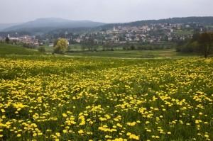 fioriture nella prateria