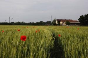 Un paese agricolo