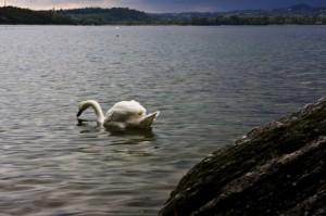 Il lago ed i suoi abitanti