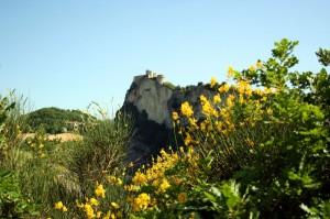 Rocca e Ginestre