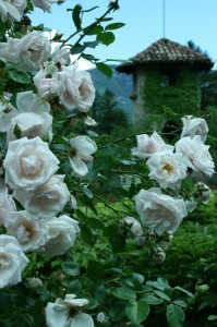 rose nel parco del castello di campo