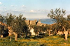 il castello tra gli ulivi