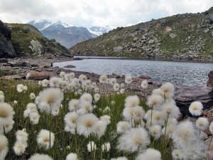 Lago delle marmotte