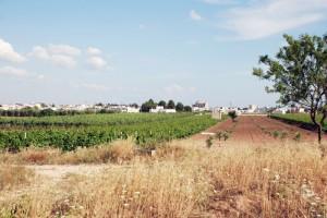 Avetrana, panorama dalla campagna