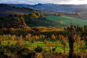 Le colline di Montespertoli ……………..accarezzate dal sole ……..