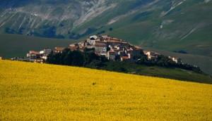Castelluccio di Norcia in giallo!
