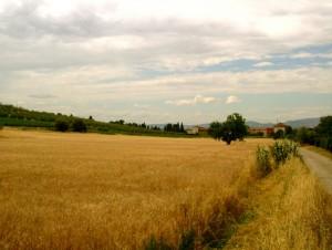 La frazione di Bagnolo vista dalla campagna circostante…