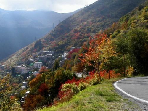 Briga Alta - boschi in autunno, Piaggia, frazione di Briga Alta, Val Tanaro