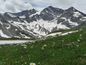 Ceresole Reale: valle in fiore