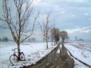 Campagna cremasca d'inverno