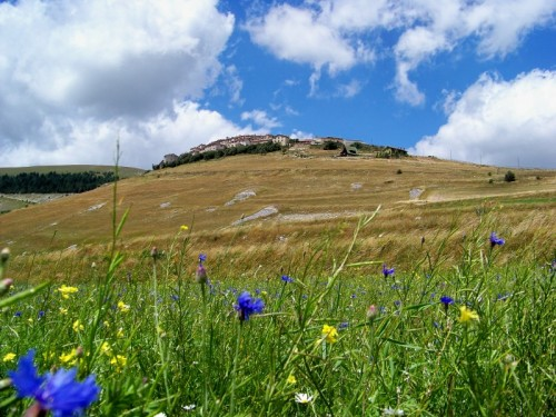 Norcia - Castelluccio e i fiori