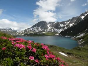 Lago fiorito