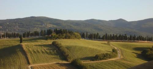 Lajatico - Lajatico panorama estivo