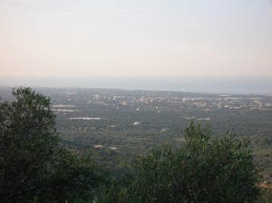 La valle degli ulivi