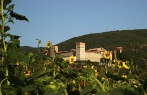 girasoli al Castello Pieve di Vescovo