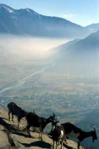 La valle con Samolaco da Signame