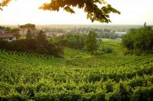 Paesaggio (di)vino
